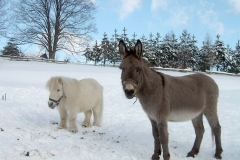 kamosky-v-zime-17b5-1-1